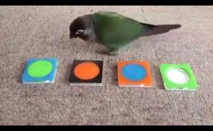 بالفيديو .. شاهد ذكاء طائر
