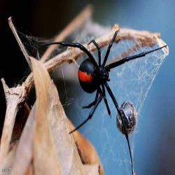 لغز قوة شباك العنكبوت