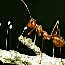 كيف يشم النمل الطريق الصحيح رغم عدم وجود انف له
